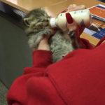 Two week old kitten.1